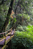Walkway in Mossy Forest, thailand Royalty Free Stock Images
