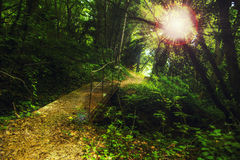 Walkway in the mountain forest Royalty Free Stock Image
