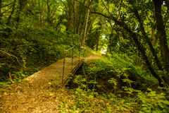 Walkway in the mountain forest Royalty Free Stock Photos