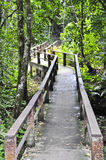 Walkway in national park. Royalty Free Stock Photography