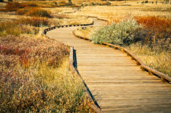 Walkway. A nature path near North Lake Tahoe Royalty Free Stock Photography