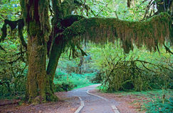 Walkway in Olympic National Park Stock Images