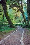 Walkway in Olympic National Park Stock Photography
