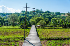 Walkway over vegetable plot Royalty Free Stock Photo