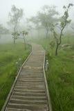 Walkway på berg i dimman Arkivbilder