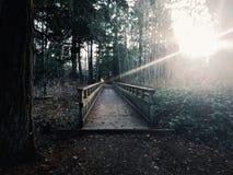 Walkway på Coldwater laken royaltyfri foto
