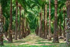 Walkway in palm tree garden. royalty free stock photos