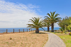 Walkway with palm trees Stock Photos