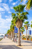 Walkway with palm trees Royalty Free Stock Images