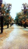 Walkway between palm trees stock images