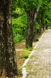 Walkway in the park. View of walkway in the park Royalty Free Stock Photography