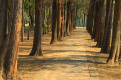 Walkway in the park Royalty Free Stock Photo