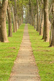 Walkway in Park Royalty Free Stock Photo
