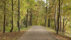 Walkway in the park. Autumn daytime. Smooth dolly shot.  stock video
