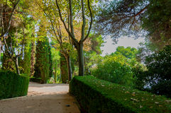Walkway in the park with bright greenery. Walkway in the mediterranian park with bright greenery Royalty Free Stock Photography