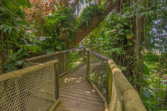Walkway in the Park of Guadeloupe Stock Images