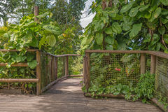 Walkway in the Park of Guadeloupe. Parc des Mamelles Stock Image
