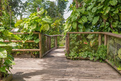 Walkway in the Park of Guadeloupe Stock Photos
