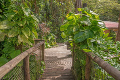Walkway in the Park of Guadeloupe Stock Photography