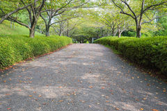 Walkway in the park. On summer japan Lonely place stock photos