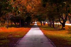 Walkway park Royalty Free Stock Photo