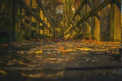 Walkway path through the forest in autumn landscape fall royalty free stock photos