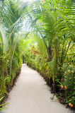 Walkway path through tropical jungle to beach  resorts Little Co Royalty Free Stock Photos