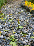 Walkway of pebbles strewn with fallen leaves Stock Images