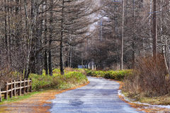 Walkway in pine tree forest Royalty Free Stock Photos