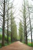 Walkway with pine tree Stock Image