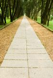 Walkway in the pine woods Stock Image
