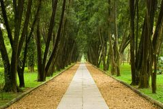 Walkway in the pine woods Royalty Free Stock Photography