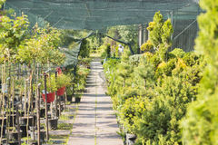 Walkway at plant nursery Stock Photo
