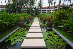 Walkway on pond full of water lilies in tropical garden. Royalty Free Stock Photo