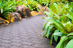 Walkway in public garden. Which surrounding with tree and rock Royalty Free Stock Photos