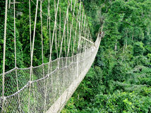 Walkway in rain forest. Rope walkway through the treetops in a rain forest in Ghana royalty free stock image