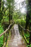 Walkway in the rainforest at Ang Ka Doi Inthanon,Thailand Royalty Free Stock Image