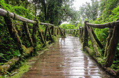Walkway in the rainforest at Ang Ka Doi Inthanon,Thailand Royalty Free Stock Photos