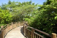Walkway through the Rainforest Stock Photography