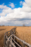 Walkway in a reed thicket Royalty Free Stock Images