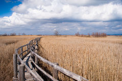 Walkway in a reed thicket Stock Images