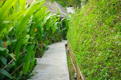 A walkway in resort in Thailand that fulled with palm green tree. S stock photos