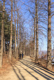 Walkway through row of trees. On the lakeside Stock Images