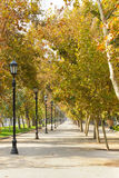 Walkway in Santiago, Chile. A tree lined walkway through Santiago, Chile in autumn Stock Image