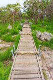 Walkway at savanna in Thailand. For natural walks to study a mixed woodland grassland ecosystem royalty free stock photos