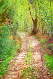 Walkway in secluded deciduous forest Royalty Free Stock Images
