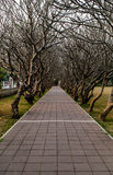 A walkway in the shade of branch Royalty Free Stock Photography