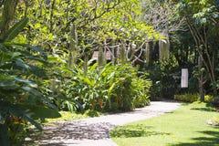 Walkway in the shady botanic garden Stock Photos