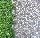 Walkway and shrubs Stock Photo
