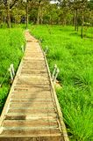 Walkway at Siam tulip field. Walkway at siam tulip on green field royalty free stock images